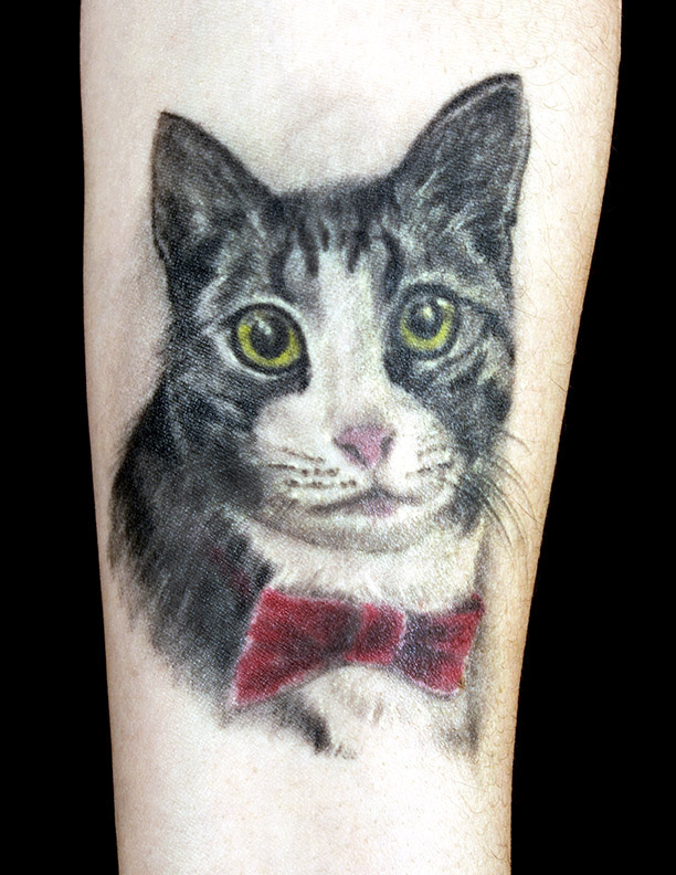 cat-colour