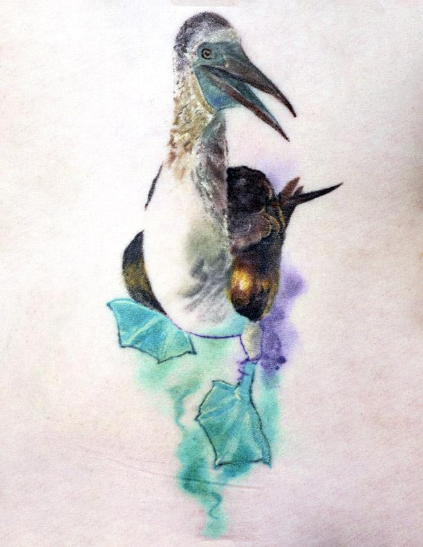bluefootedboobie-watercolour